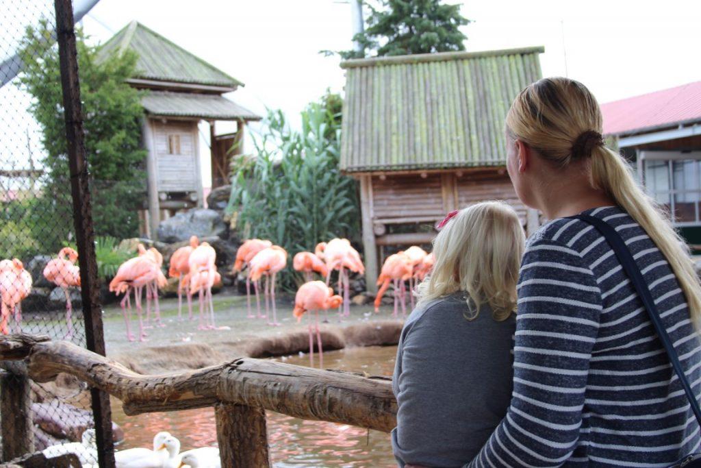 roze-flamingo-orchideeen-hoeve