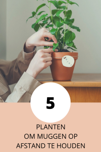 Planten tegen muggen